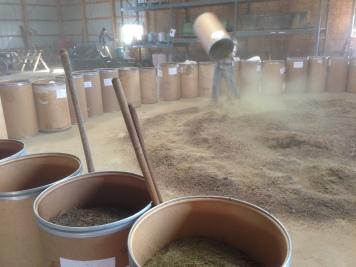 IMG_3056 mixing seed