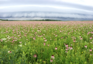 storm front over pale purple coneflower Nachusa by BKleiman 2013 06 22